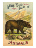 Bear on Book Cover