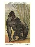 Highland Gorilla