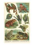 Variety of Amphibians