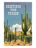 Greetings from Tucson  Arizona  Saguaros