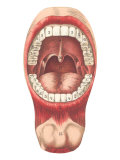 Diagram of Mouth and Teeth