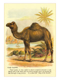 Camel by the Nile