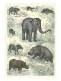 Variety of Mammals