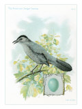 Catbird and Egg