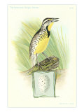 Meadowlark and Egg