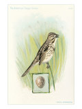 Song Sparrow with Egg