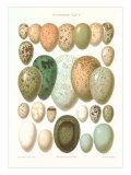 Eggs of Birds Found in Eurpoe
