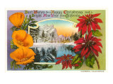 Season&#39;s Greetings  Cambria  California  Poppies  Poinsettias