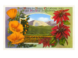 Season&#39;s Greetings  Ventura  Poppies  Poinsettias
