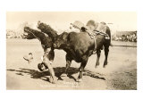 Bull Throwing Rodeo Rider