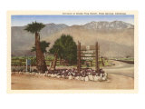 Smoke Tree Ranch  Palm Springs  California
