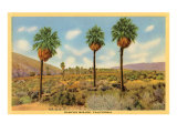 Vintage Rancho Mirage