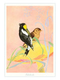 Bobolinks  Illustration