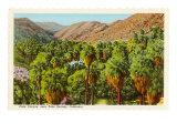 Palm Canyon  Palm Springs  California
