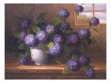 Hydrangea Blossoms ll