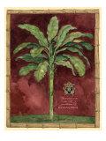 Caribbean Palm II