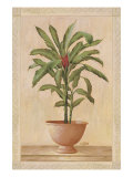 Potted Palm I
