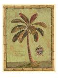 Caribbean Palm IV