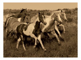 Horses Running II