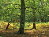 Trees in Woodland in the Forest of Dean  Gloucestershire  England  United Kingdom  Europe