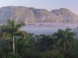 Vinales  Cuba  West Indies  Central America