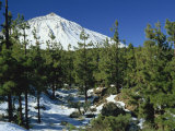 Winter Scene  Mount Teide  Tenerife  Canary Islands  Spain  Europe