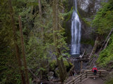 Marymere Falls  Olympic National Park  UNESCO World Heritage Site  Washington  USA