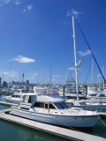Boats in the Westhaven Yacht Marina in the City of Auckland  North Island of New Zealand