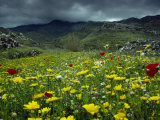 Spring Wild Flowers with Hills in the Background at Apollon  on Naxos  Cyclades Islands  Greece