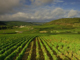 Landscape of Vineyards and Hills Near Beaune  Burgundy  France  Europe