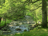 Afon Artro Passing Through Natural Oak Wood  Llanbedr  Gwynedd  Wales  United Kingdom  Europe