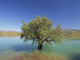 Tranquil Scene of Landscape of an Olive Tree on the Edge of a Lake Near Malaga  Andalucia  Spain