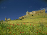 Wild Flowers in Front of the Castle of Medallin in Extremadura  Spain  Europe
