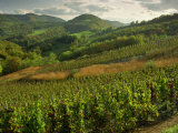 Vineyards Near Cerdon  Bugey  Ain  Rhone Alpes  France  Europe