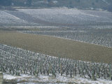 Landscape of Vineyards in Winter with Snow Near Pommard  in Burgundy  France  Europe