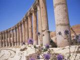 Oval Plaza  Jerash  a City of the Roman Decapolis  Jordan  Middle East