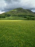 Buttercup Meadow  Wilkinsyke Farm  Lake Distict National Park  Cumbria  England  United Kingdom