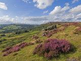 Heather Moorland  Baslow Edge Near Curbar  Peak District National Park  Derbyshire  England  UK