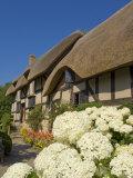 Anne Hathaway's Cottage  Shottery  Near Stratford-Upon-Avon  Warwickshire  England