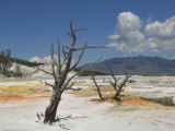 Canary Spring  Top Main Terrace  Mammoth Hot Springs  Yellowstone National Park  Wyoming  USA