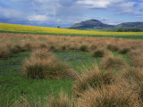 Landscape View of Grass and Field  with Lomond Hill Beyond from Milnathort  Scotland  UK