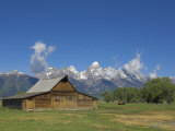 Mormon Row Barn and a Bison  Jackson Hole  Grand Teton National Park  Wyoming  USA