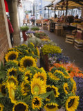 Sunflowers for Sale in Rialto Market  Venice  Veneto  Italy  Europe