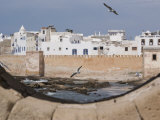 Ramparts of Town and Seagulls  Essaouira  Morocco  North Africa  Africa