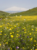 Spring Meadow with Snow Covered Mount Etna in Distance  Sicily  Italy  Europe