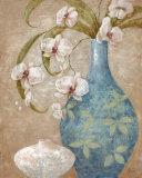 Orchid Grace II