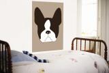Brown Boston Terrier