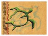 Hilihili Honu  Green Sea Turtle  Hawaiian Petroglyph