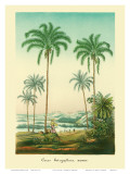 Coconut Palm Trees  1854