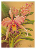 Pink Cattleya Orchid Flower